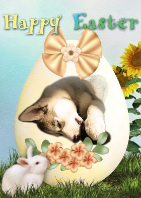 Easter egg card with Siberian Husky puppy and a white bunny.