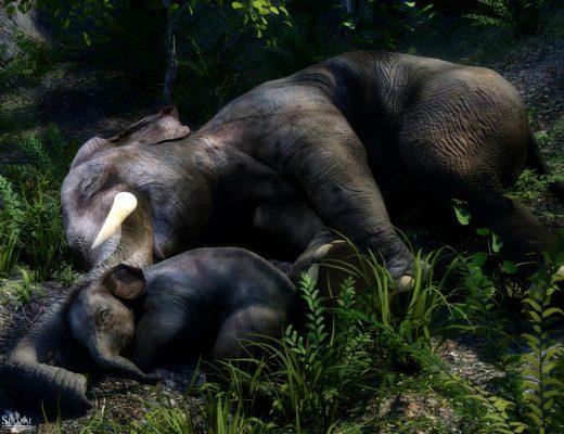 Qualifying item used  Indian Elephant and Baby by Alessandro Mastronardi