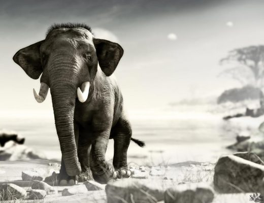 A majestic elephant walking in the Savannah, in this photo realistic B&W Daz Studio render.